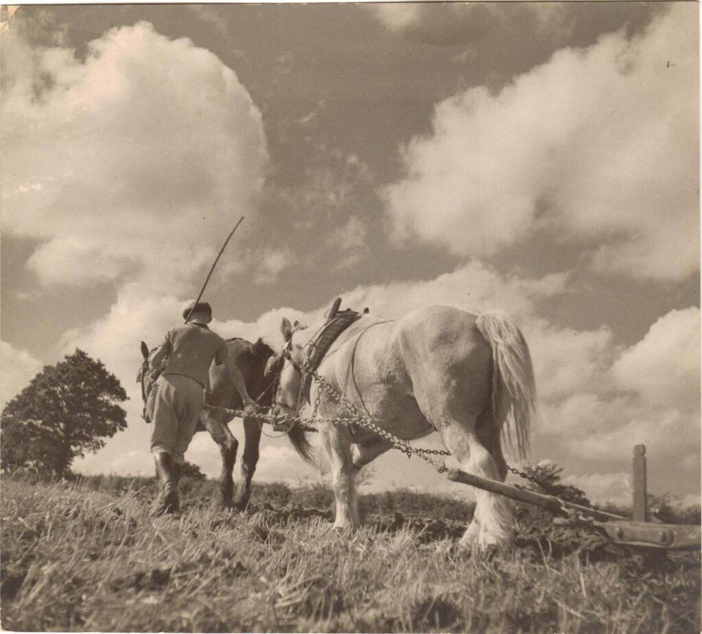 Grandad, Henry Missing, ploughing with his favourite horse.