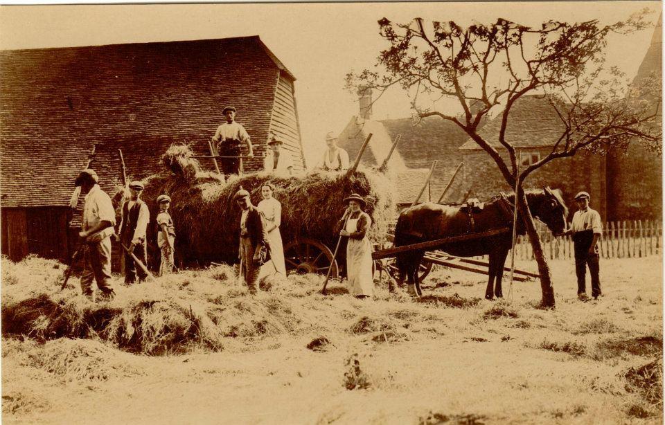 Haymaking in Egerton