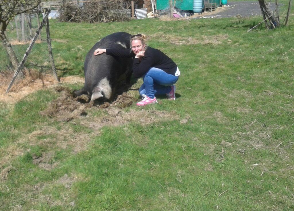 Helen with a big black pig in a field