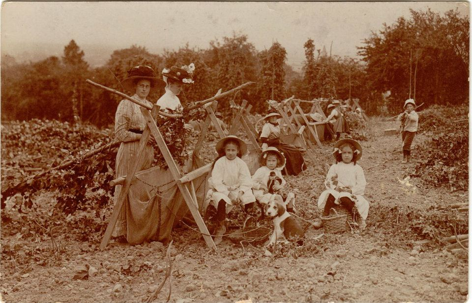 Hop pickers, Egerton