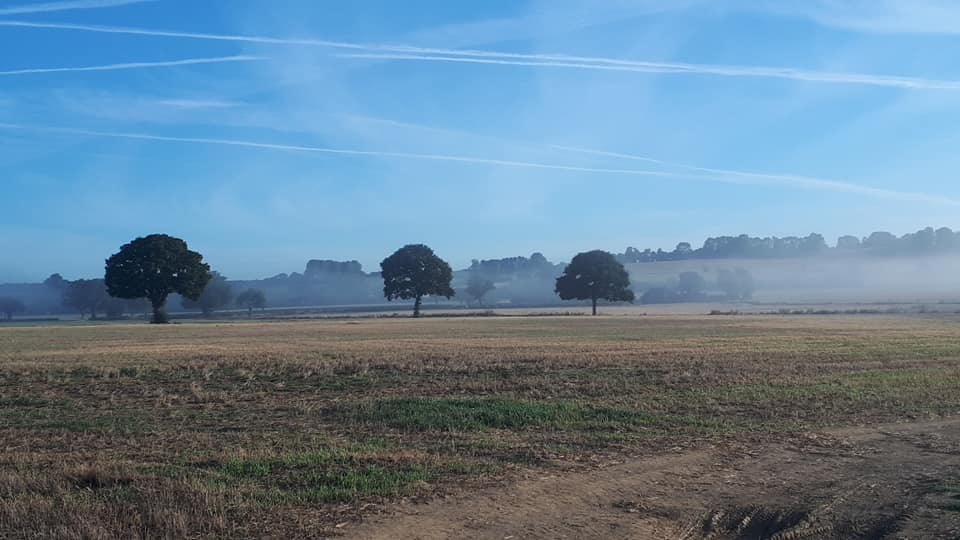fields with three trees and morning fog