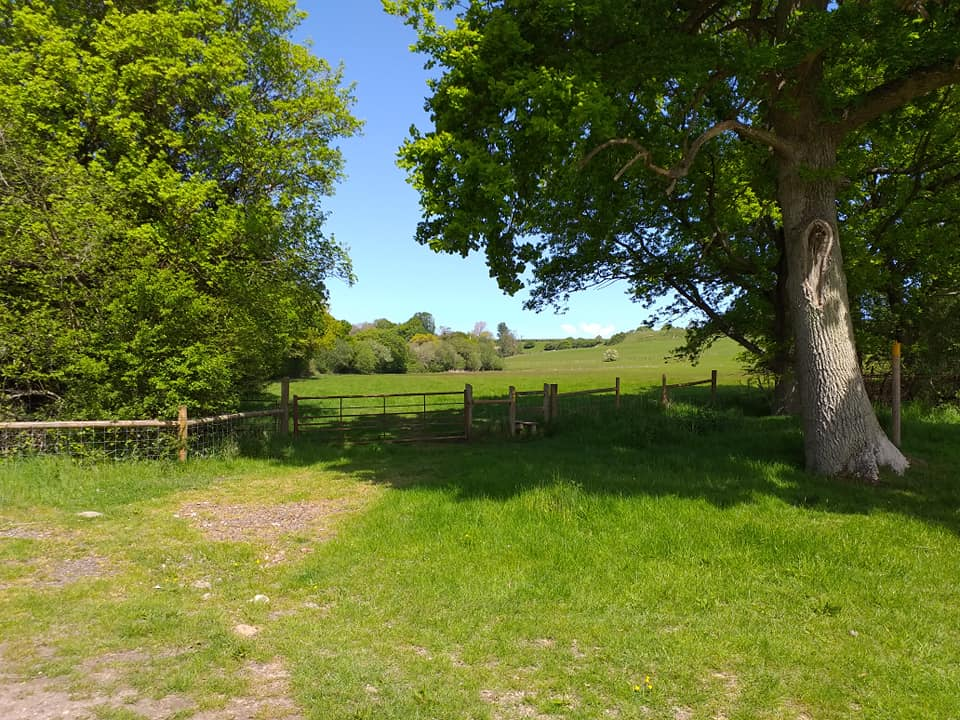 tree, gate and field